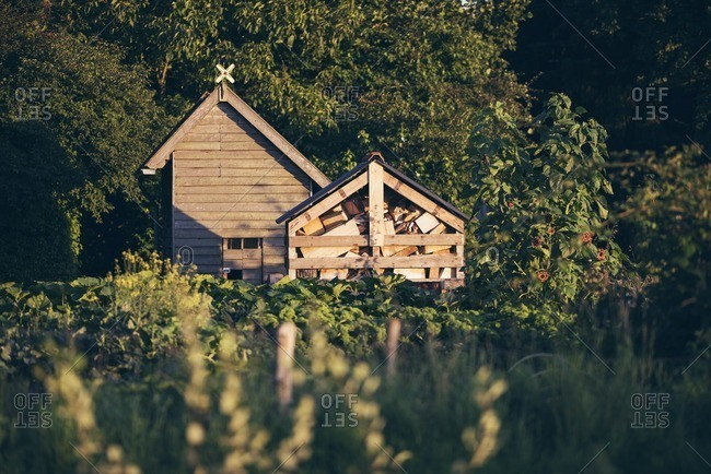 Shed in garden with chopped wood