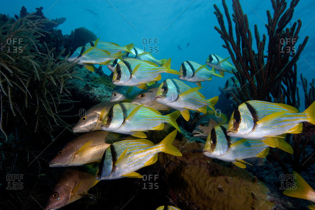 Schooling fish on wreckage
