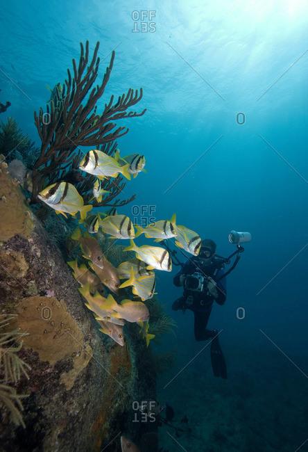 Scuba diver on shipwreck