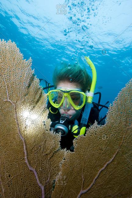 Diver framed by sea fan