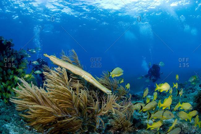 Marine life on coral reef