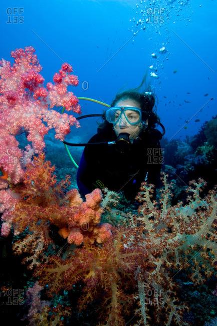 Scuba diver amid soft corals