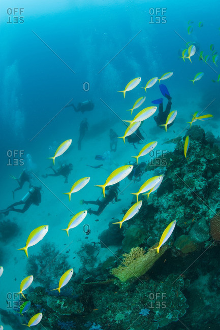 Fish and scuba divers