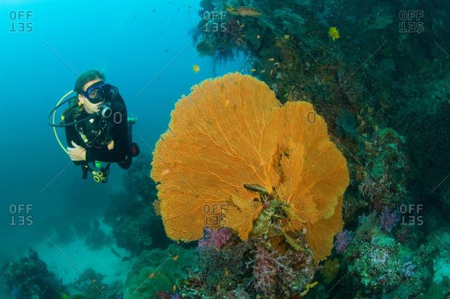 Thailand - Person scuba diving