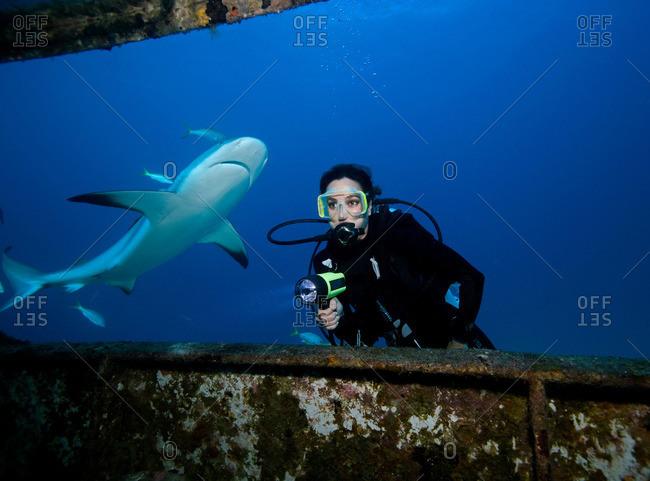 Scuba diver with shark - Offset