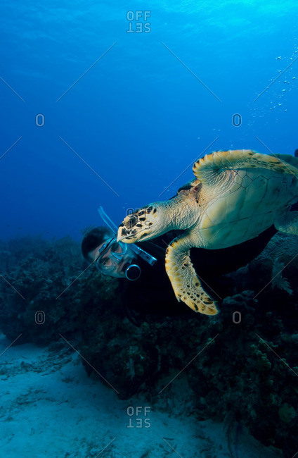 Diver with turtle