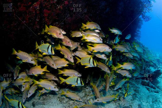 Schooling fish near shipwreck