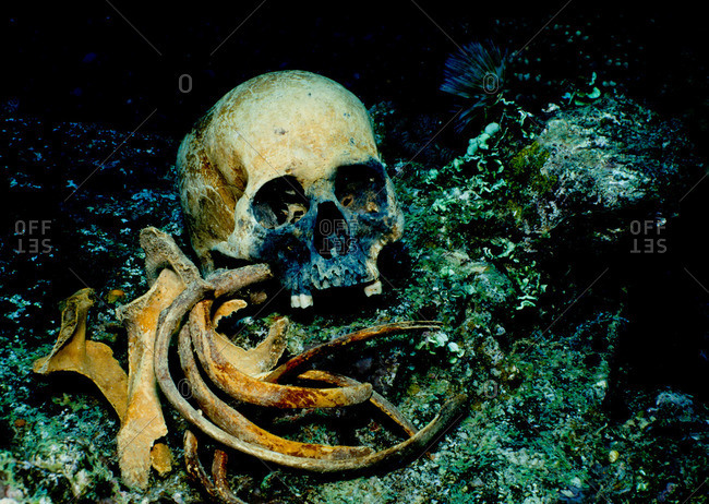 Remains on shipwreck - Offset Collection