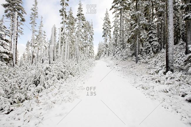 Snow covered trees on mount hood