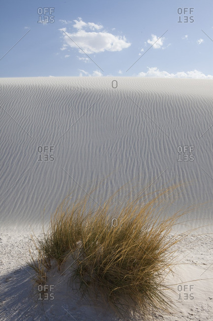 Grassy bush at the bottom of a sand hill at White Sands National Monument, New Mexico
