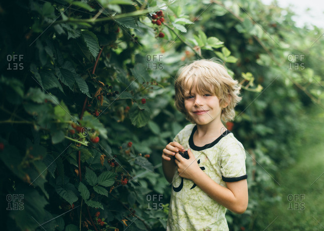 Boy picking berries from a row of tall bushes