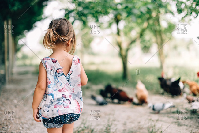 Toddler girl walking in yard with chickens