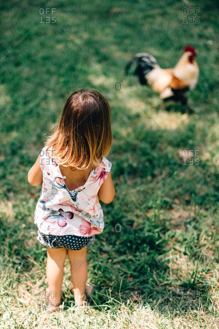 Young girl cautiously approaches a rooster