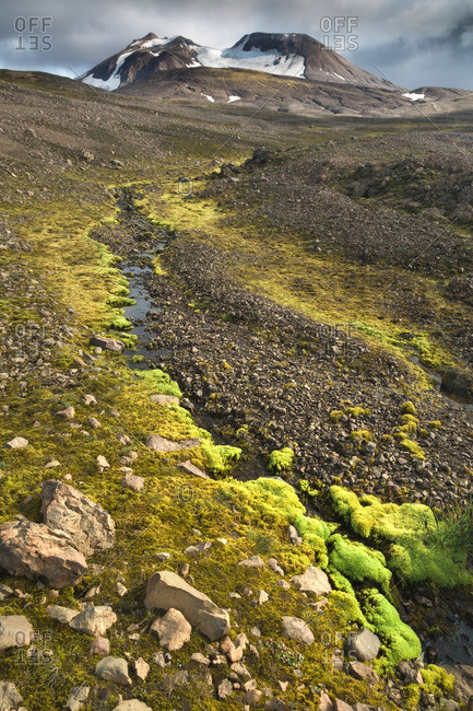 Icelandic moss alongside mountain stream at remote volcanic location in Kjoslur highlands