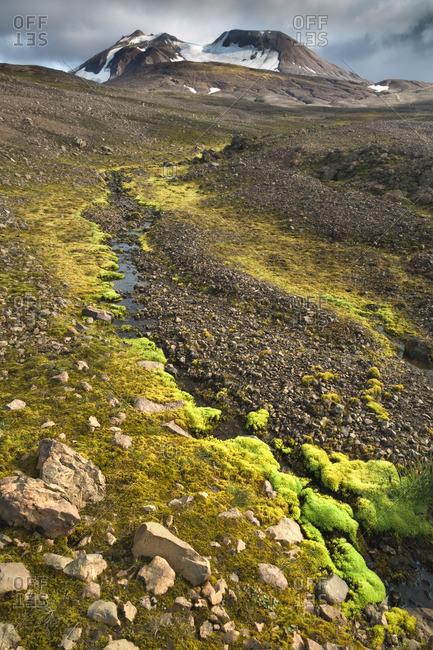 Icelandic moss alongside mountain stream at remote volcanic location in Kjoslur highlands