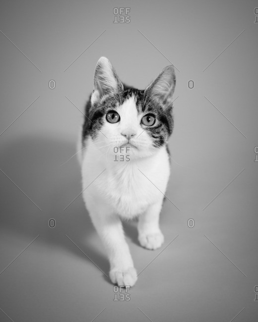 Portrait of a curious kitten