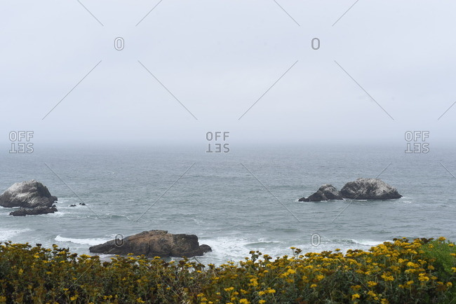 Rocks in the ocean as seen from wildflower-covered cliff