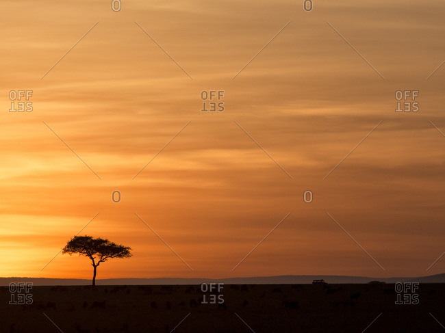 Iconic safari image of sunset on Masai mara