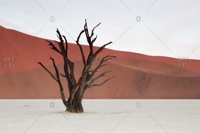 Deadvlei scene with dead tree and red sand dune