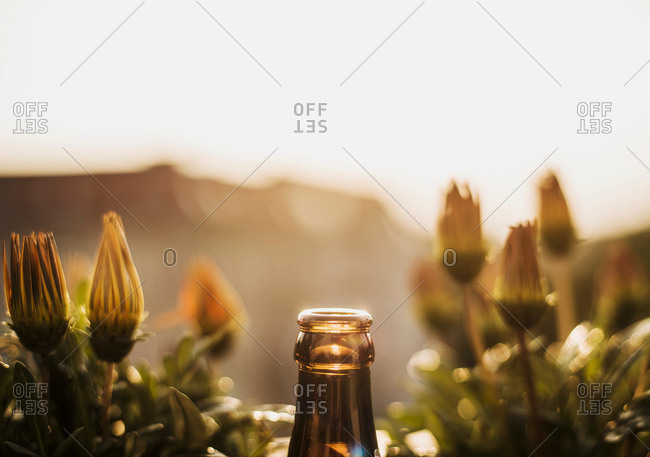 Top of glass bottle, flowers behind