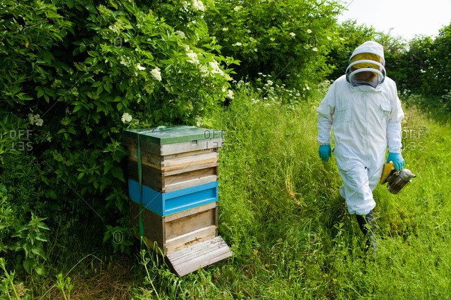 Beekeeper wearing protective clothing approaching bee hive