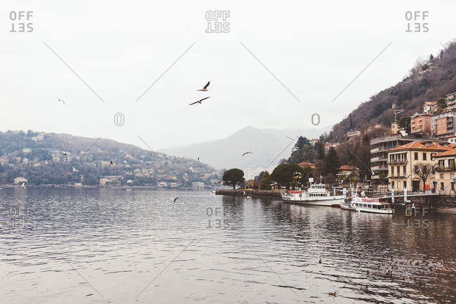 Misty view of gulls flying over Lake Como, Italy