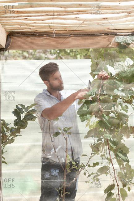 Man tending to growing plant