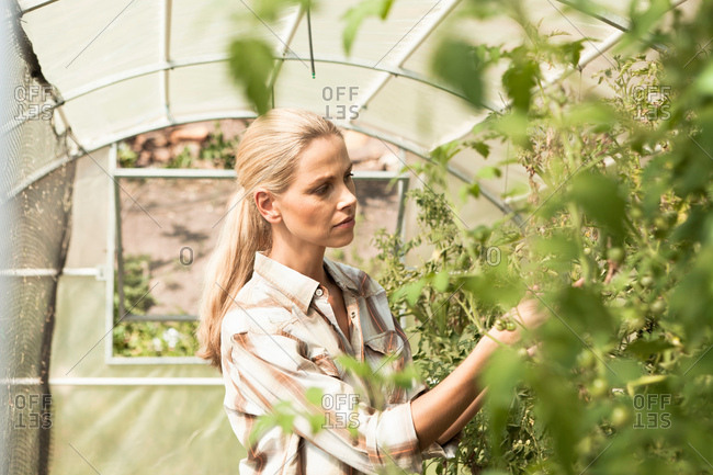 Mature woman tending to plants in greenhouse