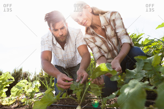 Mature couple tending to plants in garden