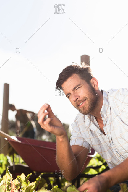 Mature man inspecting tiny seedling in garden