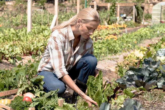 Mature woman tending to vegetables growing in garden