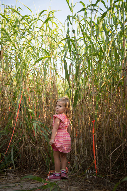 Young girl walking through pumpkin patch, rear view