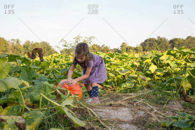 Young girl in pumpkin patch, choosing pumpkin