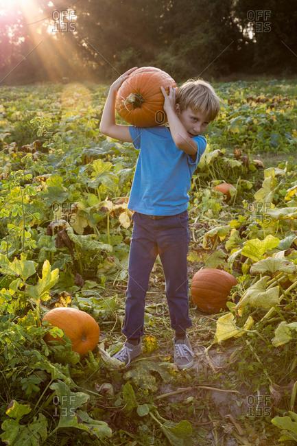 Young boy in pumpkin patch, carrying pumpkin