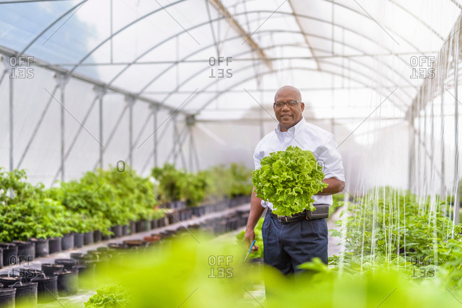 Portrait of manager in Hydroponic farm in Nevis, West Indies
