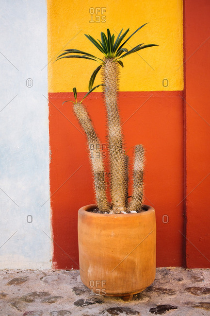 Planter against a colorful wall in Oaxaca de Juarez, Mexico