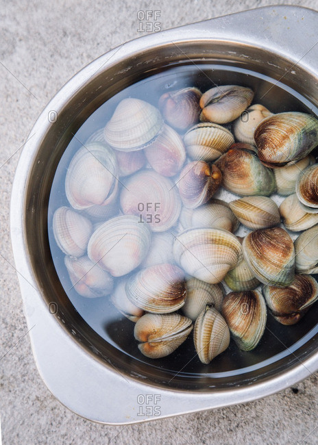 Clams in a water bath