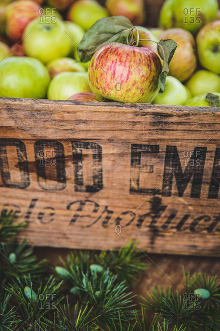 Fresh picked apples in a wooden crate