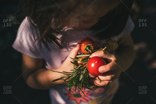 Little girl holding a handful of tomatoes and rosemary
