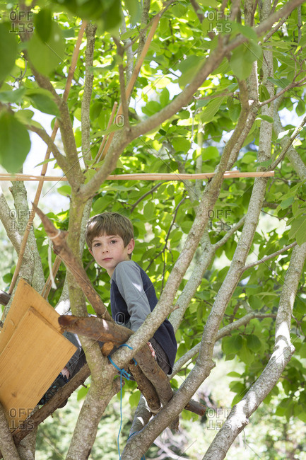 Cute young boy playing in his tree fort
