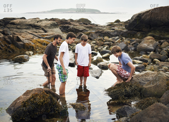 A small group of people standing in shallow water, rock pooling, finding marine life on the beach