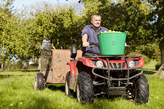 A man driving a quad bike and trailer, with tubs full of apples in an orchard