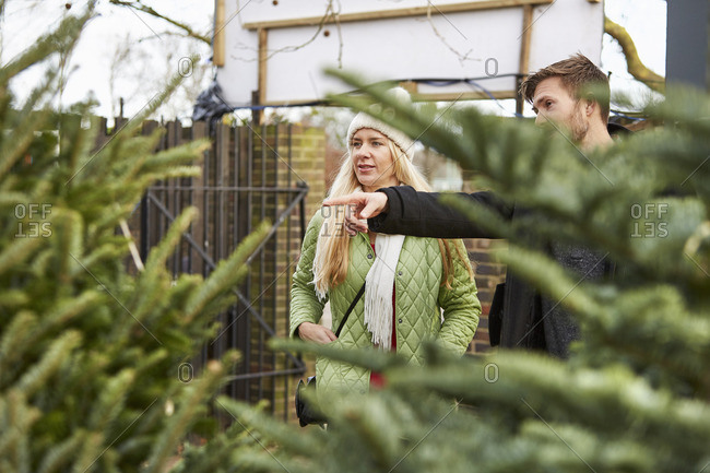 A woman and a man choosing a Christmas tree from a large selection of pine trees