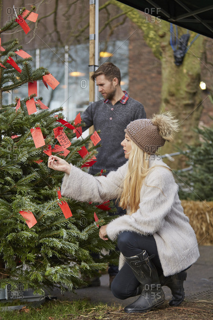 A woman choosing a traditional pine tree, Christmas tree looking at the red handwritten labels on a fir tree
