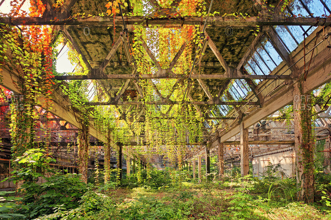Abandoned factory slowly being overtaken by nature