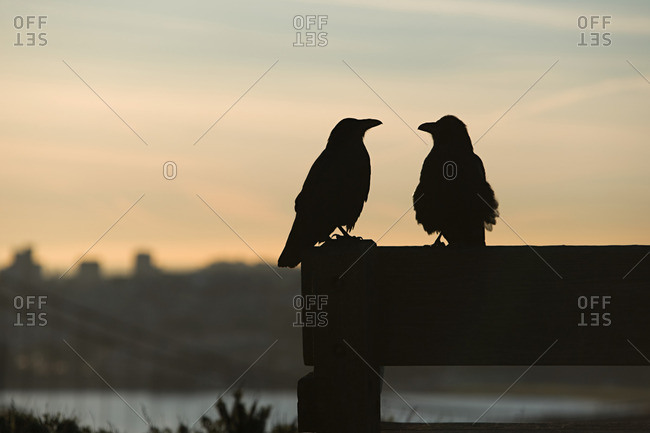 Two birds in silhouette
