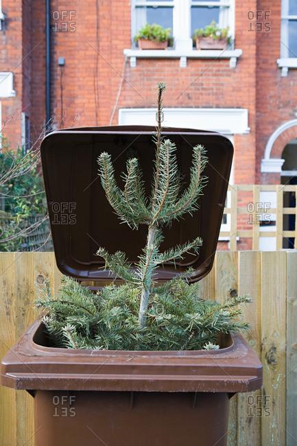 Christmas tree in wheelie bin