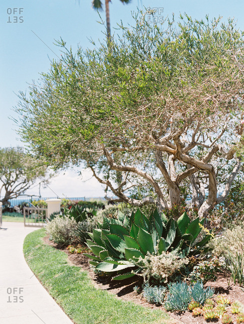 Landscaping in tropical setting - Offset