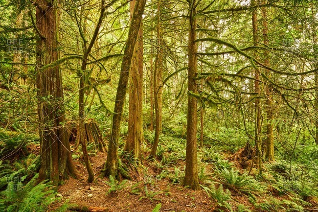 A forest in Pacific Northwest