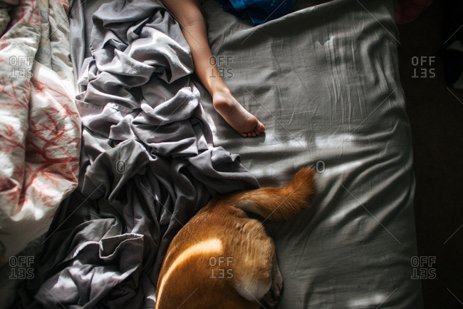 Child's leg and dog's tail in a bed with rumpled sheets